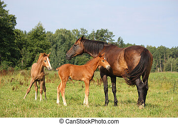 Two foals and their mother on pasture