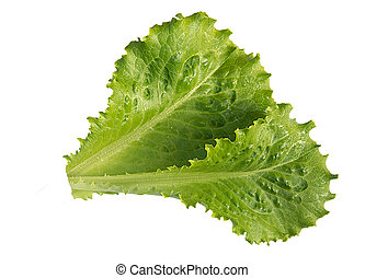 Two fresh green lettuce isolated on a white background, close-up