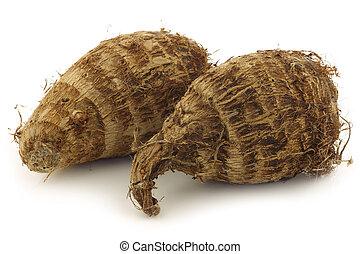 two fresh taro roots (colocasia)