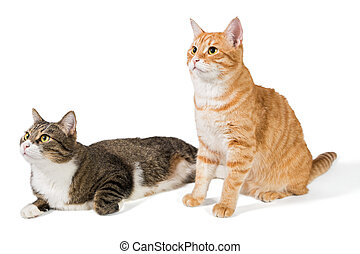 Two friendly cat