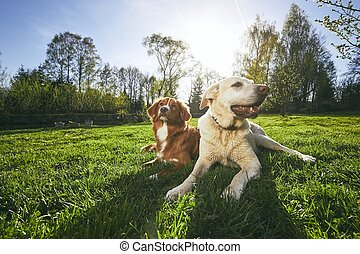 Two friendly dogs in nature