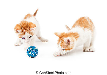 Two Frisky Kittens Playing With Toy