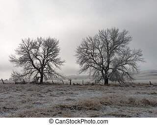 Two Frosty Trees as the Fog Lifts - Two frosty trees and...