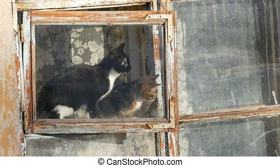 Two funny cats are sitting in the window, and looking at the...