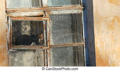 Two funny cats sit in an old vintage window and look...