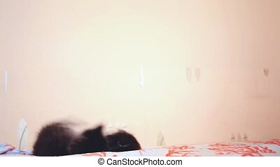 Two Funny cute Maine coon kittens fighting on the bed.