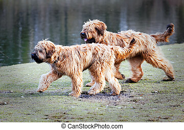 funny dogs frolicking in the park