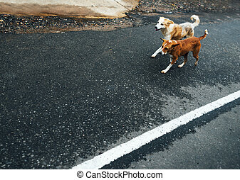 Two funny dogs walk on the asphalt