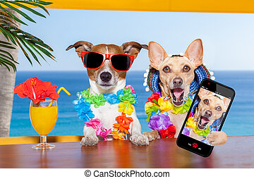 drunk dogs - two funny drunk dogs with a summer cocktail ,...