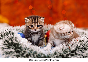 Two funny scottish grey kittens sitting on the tinsel with the blurry shiny background of Christmas lights, New Year concept, copy space