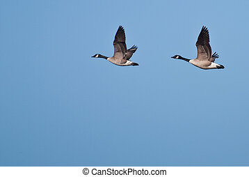 Two Geese Flying In Unison