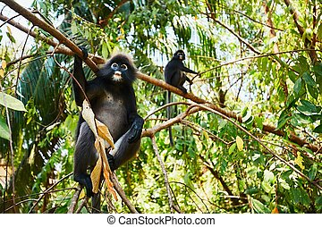 Two gibbons in jungle - Two gibbons on a tree in the...