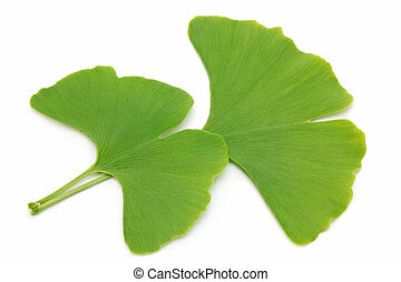 Two ginkgo leaves