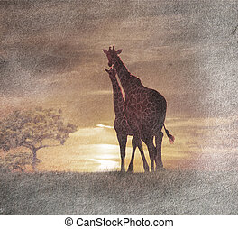 Two Giraffes At The Sunset