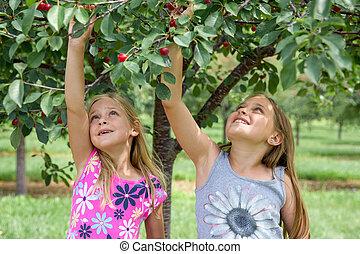 Two Girls Picking Cherries