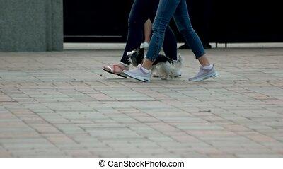 Two girls walking with little hairy dog. Women walking in on...