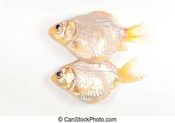 Two goldfish die