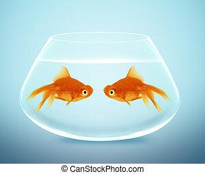 Two goldfish falling in love