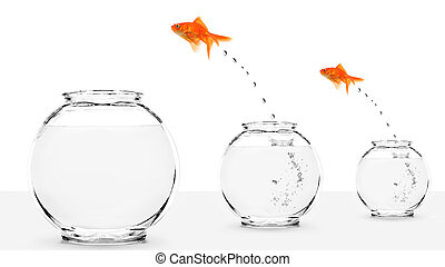 two goldfish jumping to bigger fishbowls