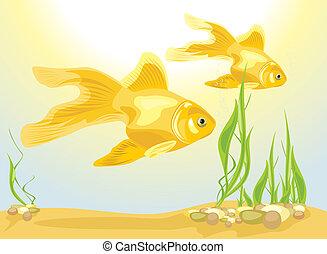 Two goldfishes among algae