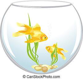 Two goldfishes in the aquarium