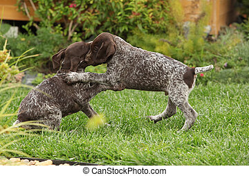Two gorgeous puppies playing in the garden