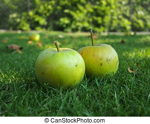 Two green apples on the grass