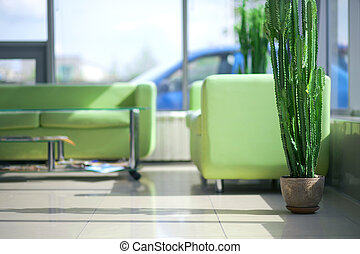 Two green sofas in the interior with cactus
