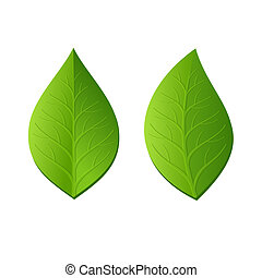 Two Green Leaves on White Background. Vector