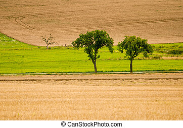 two green trees in a field