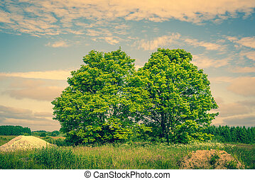 Two green trees on a field