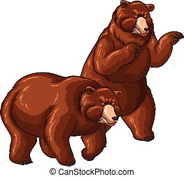 Two grizzly bears on white background
