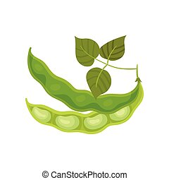 Two half bean pod with leaves. Vector illustration on white background.