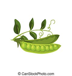 Two half pea pod with leaves. Vector illustration on white background.