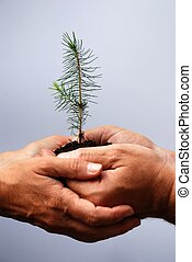 two middle aged european hands holding a little tree together