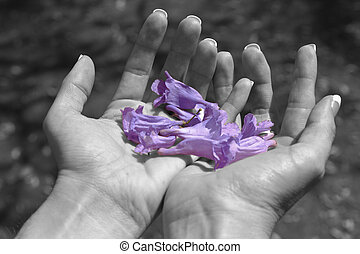 Two hands holding Jacaranda flowers in black and white carefully