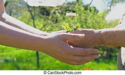 Two hands holding together young flower outdoors.