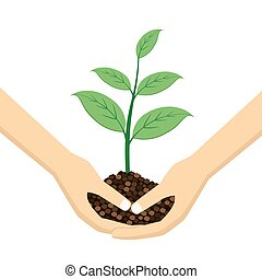 Two Hands holding young plant.