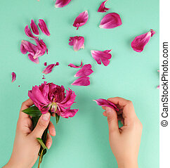 two hands of a young girl with smooth skin and red peony petals