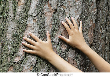 two hands on the background of an old tree, the connection between man and nature.