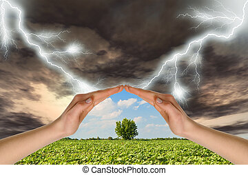 Two hands preserve a green tree against a thunder-storm....