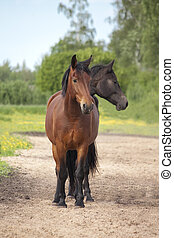 Two headed brown and black horse