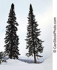 Two high fir trees