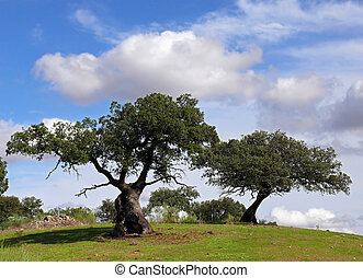 two holm oaks trees under sky with clouds