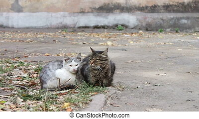 Two homeless cat sitting on the street.