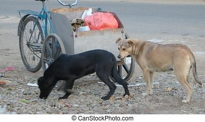 Two homeless dog sniffing garbage truck of homeless person scavenging oround trash dumpsters