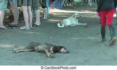 homeless dogs lying in the sand
