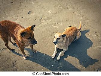 homeless dogs on the beach