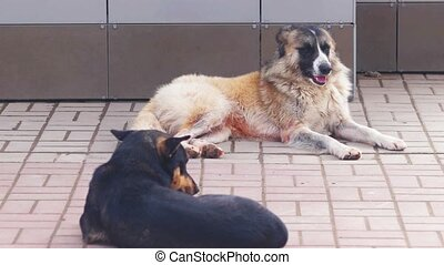 Two Homeless Dogs resting on the street surface. Dogs lying on the pavement in shadow