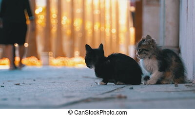 Two Homeless Kittens are Sitting on the Sidewalk, People ...